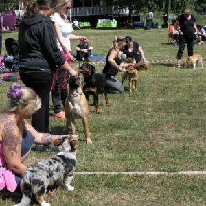Välkommen att delta i utställningar hos Svenska Hundklubben